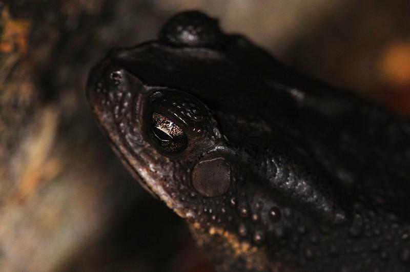 jan_01_3193_frogs_eye.jpg