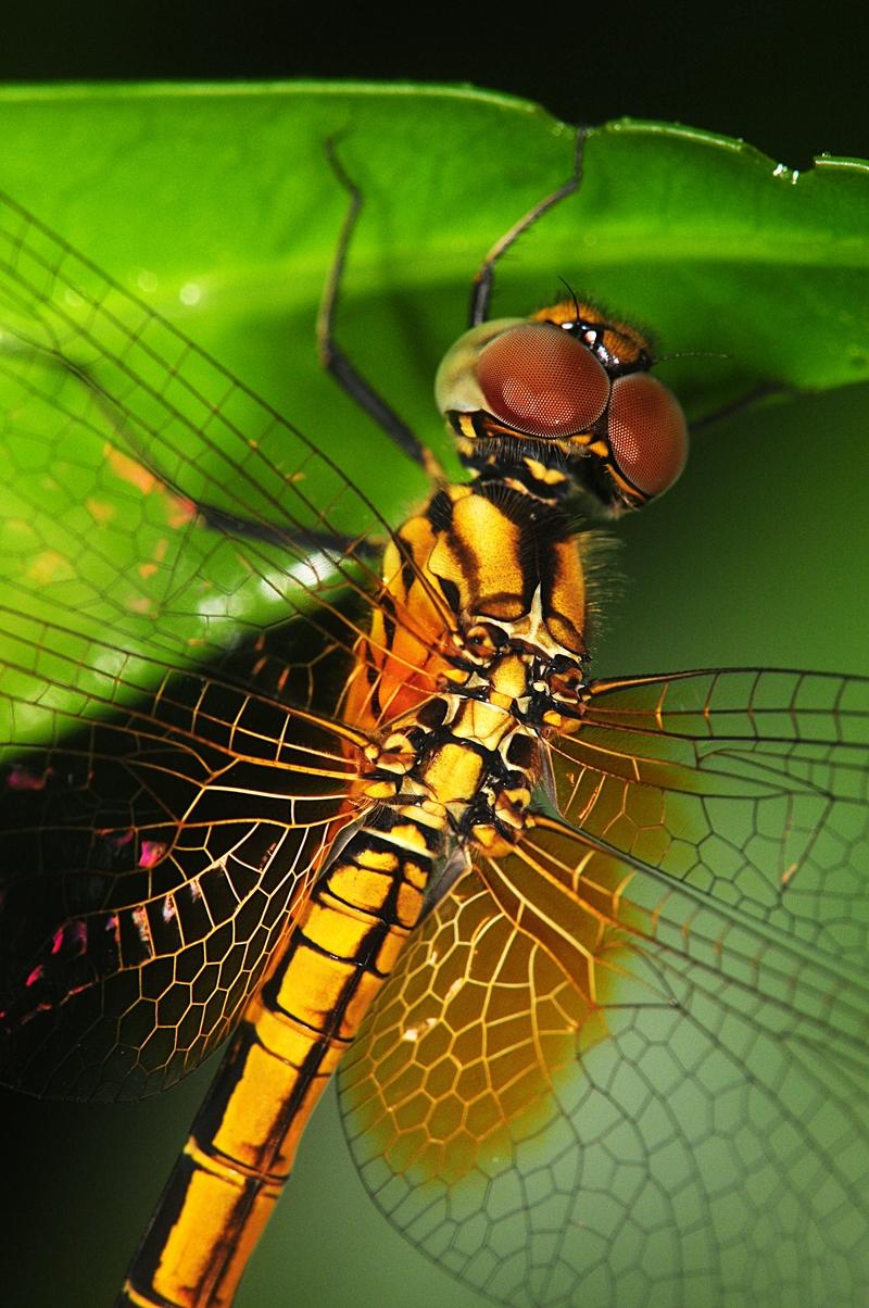 jan_01_3205_dragonfly.jpg