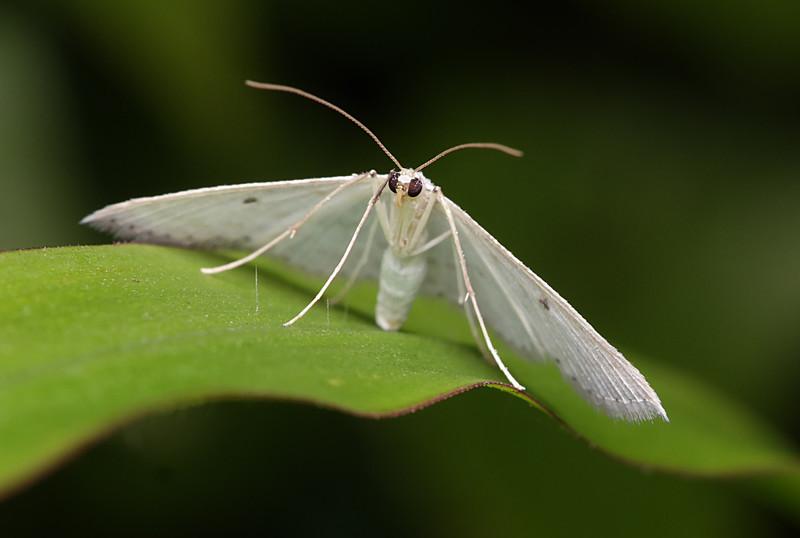 jan 03 2923 white moth
