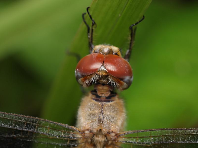 jan 03 2978 dragonfly eyes