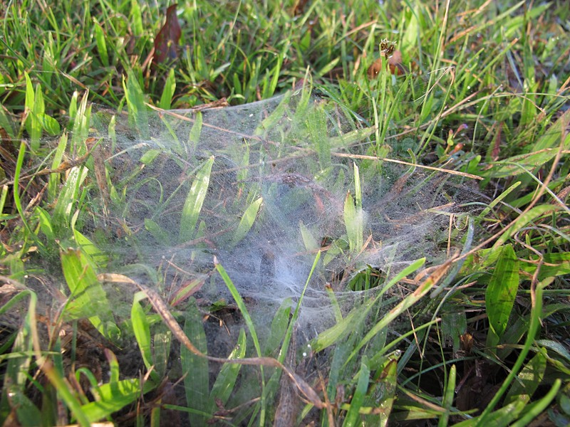 jan 07 1151 funnel web
