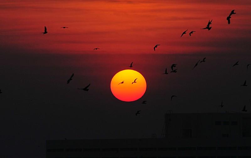 jan 08 1555 sun birds