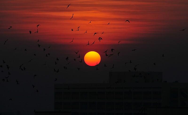 jan 08 1558 sun birds
