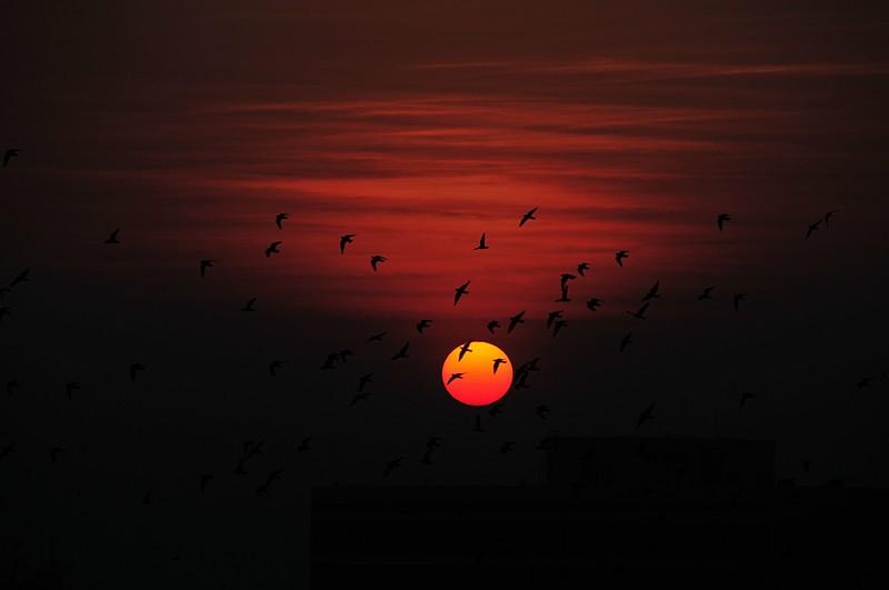 jan 08 1571 sun birds
