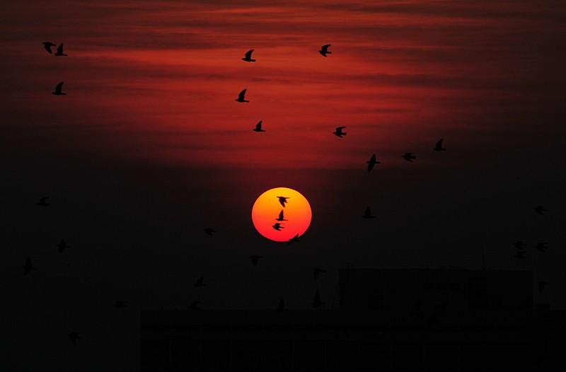 jan 08 1574 sun birds