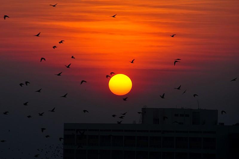 jan 08 1581 sun birds