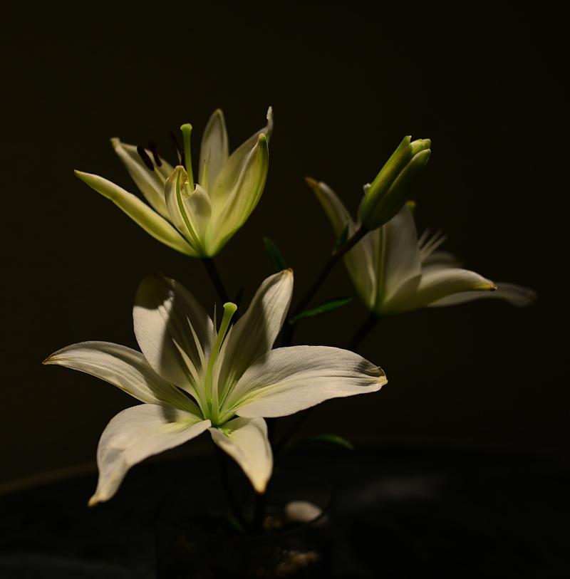 jan 12 6250 hotel lily