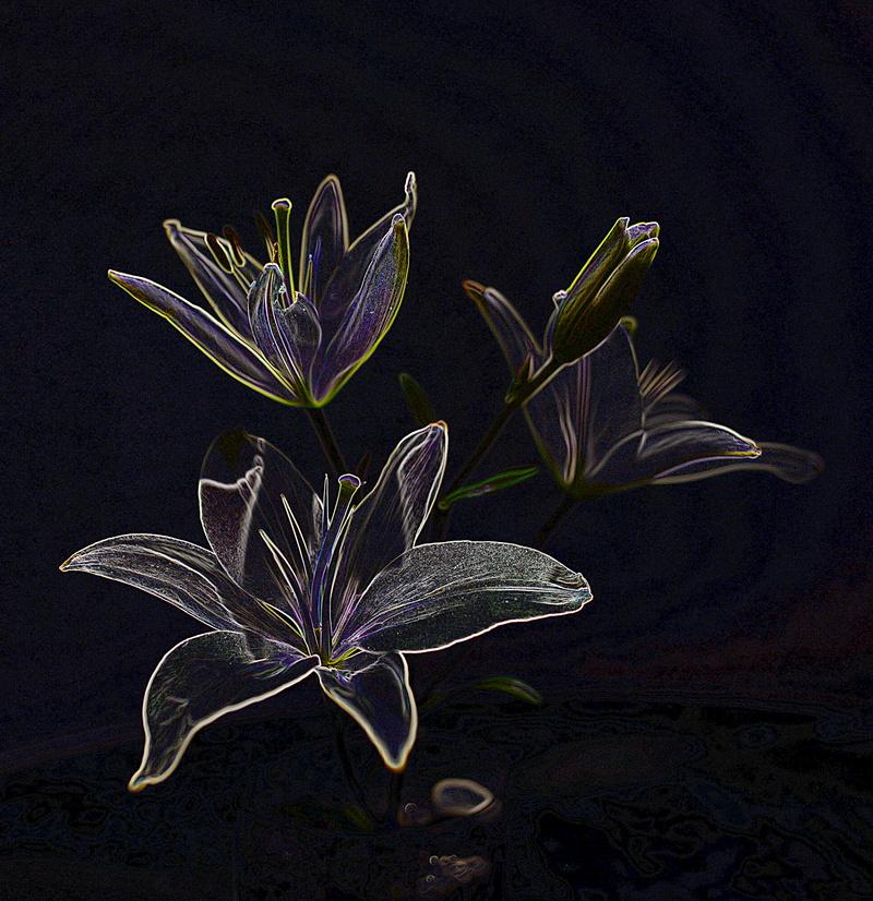 jan 12 6265 lily edge