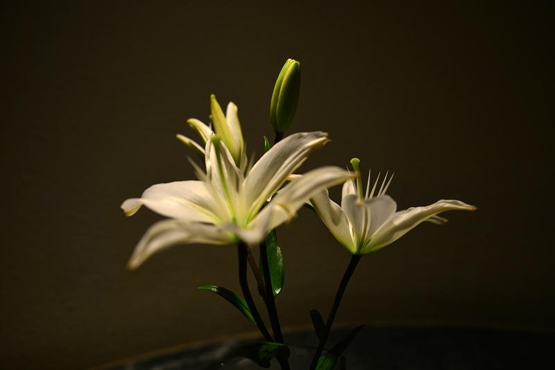 jan 12 6275 hotel lily