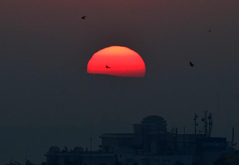 jan 14 2173 sunrise birds close