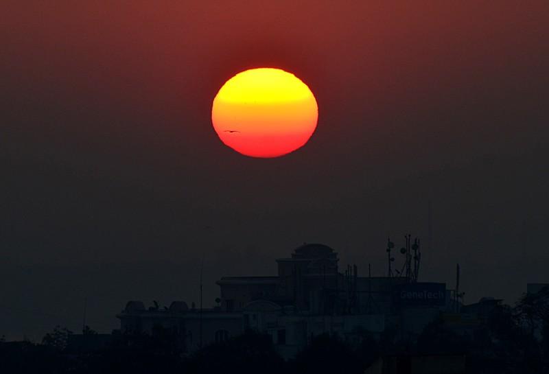 jan 14 2206 sunrise bird