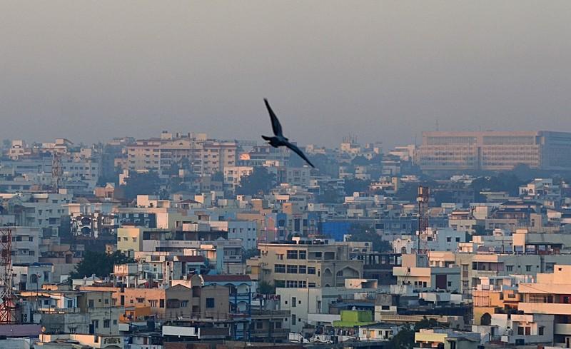 jan 14 2276 morning pigeon