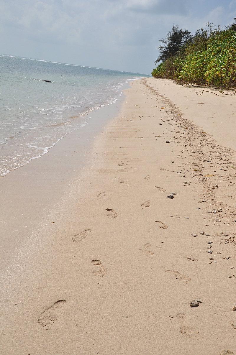 jan 17 8262 sand feet
