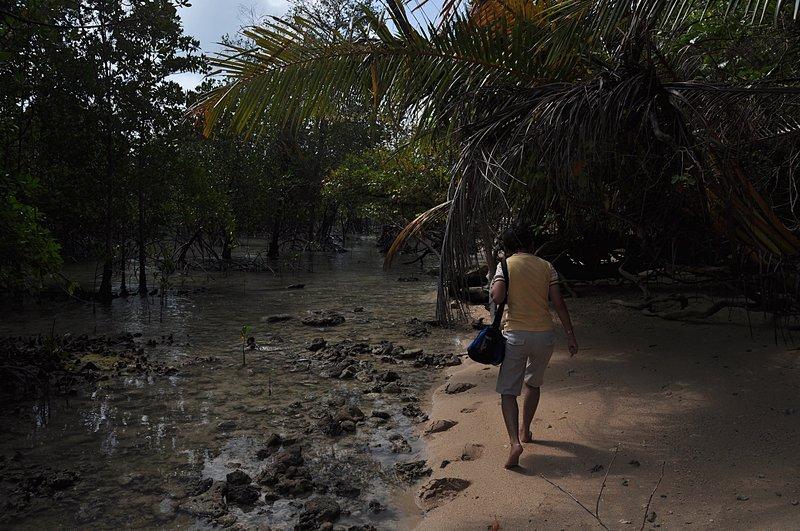 jan 17 8274 mangrove
