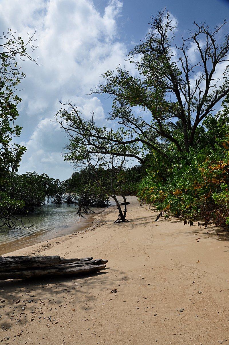 jan 17 8277 mangrove