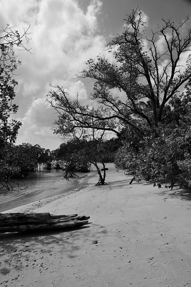 jan 17 8277 mangrove bw