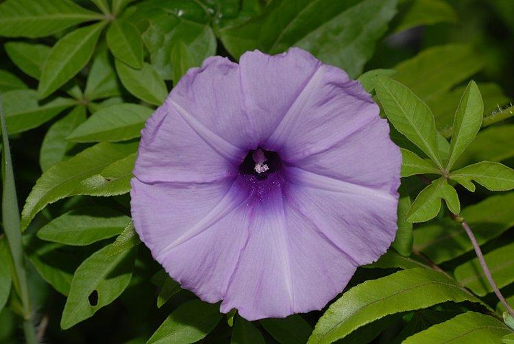 jan 20 4355 purple flower
