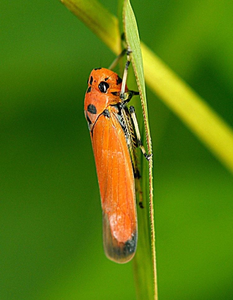 jan 20 4571 redbug side