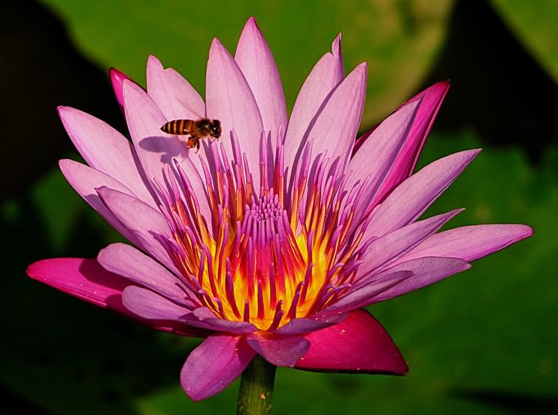 jan 21 3459 bee prospecting