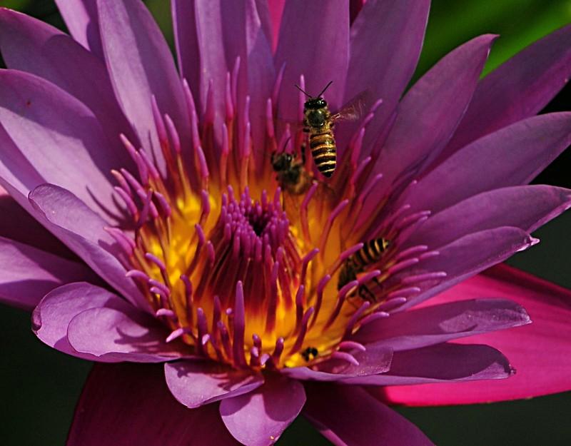jan 21 3490 3 bees