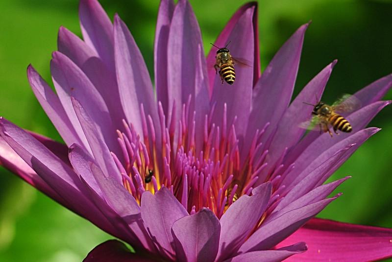 under the frangipani essay Under the frangipani de mia couto 10 you can't get lost in cape town de zoë wicomb  essay & science premio viva lectura el.