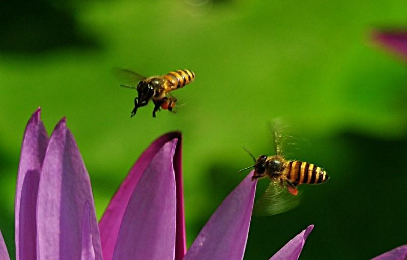 jan 21 3500 2 bees landing