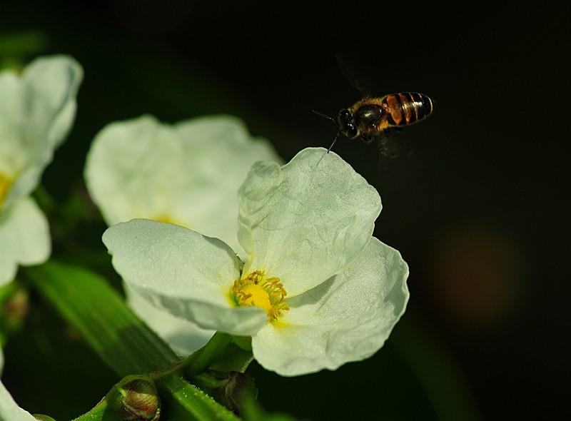 jan 21 3553 bee white flower
