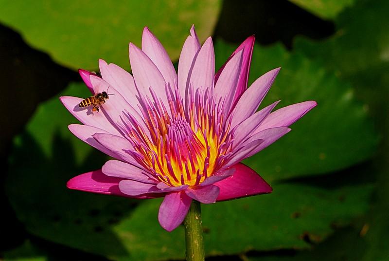 jan 21 3594 bee prospecting