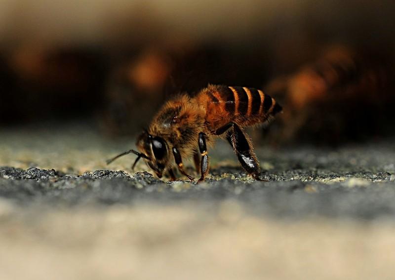 jan 21 3993 bee eating