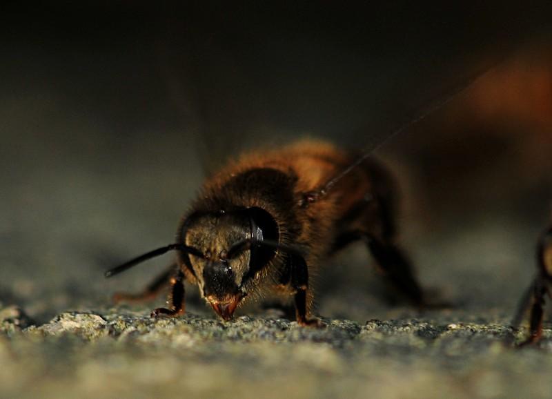 jan 21 4002 bee face