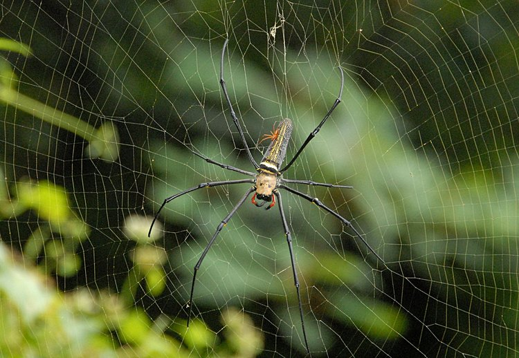 jan 21 4946 nephila male top