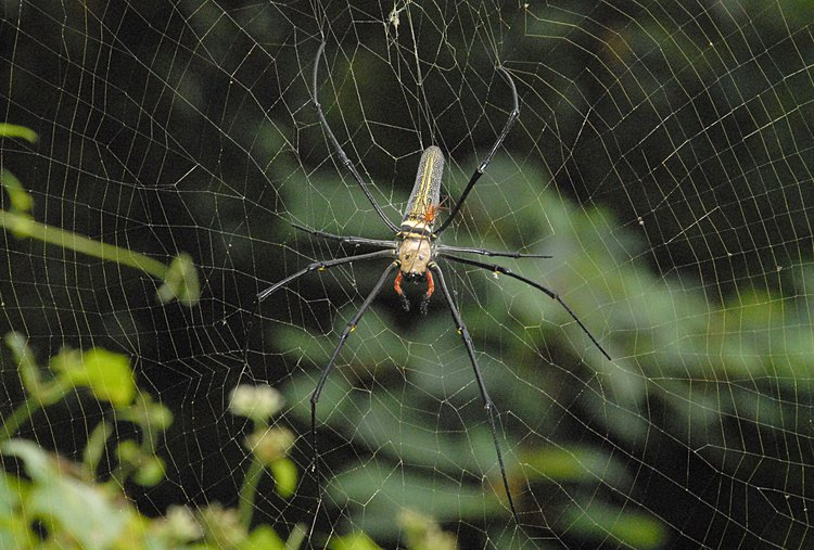jan 21 4962 nephila male top