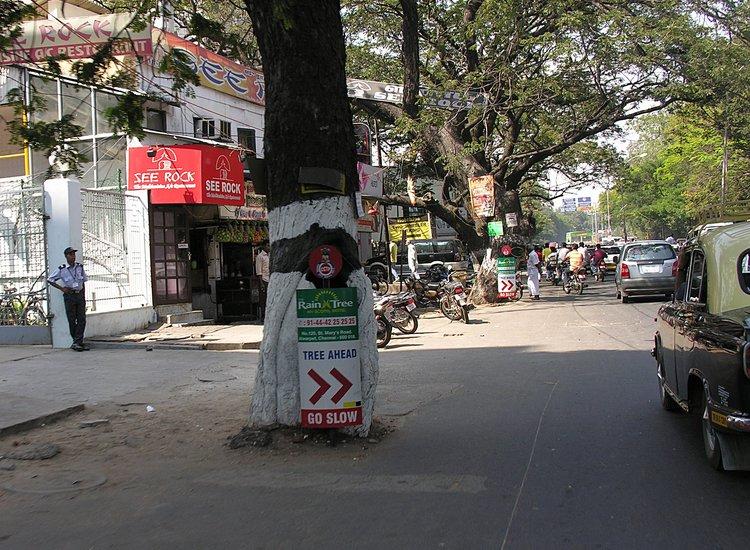 jan 26 0794 tree ahead