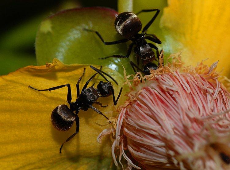 jan 31 0198 2 ants
