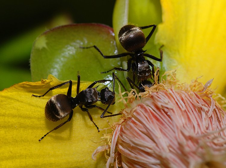 jan 31 0202 2 ants