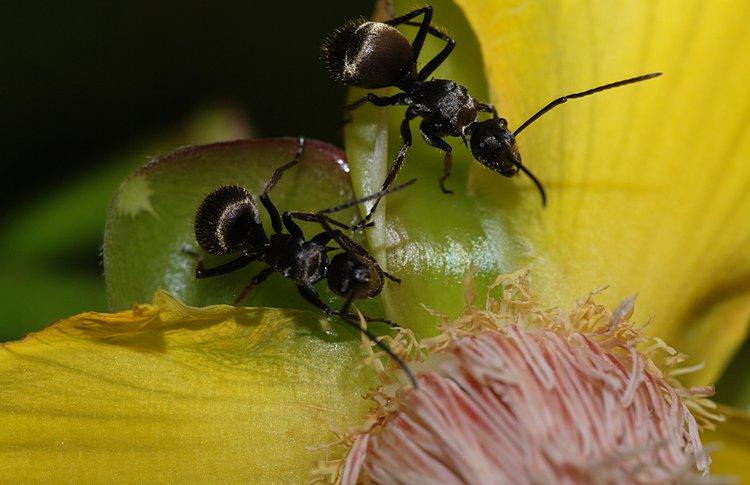 jan 31 0211 2 ants