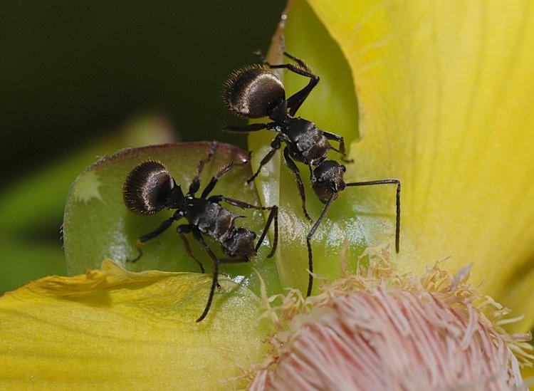 jan 31 0213 2 ants