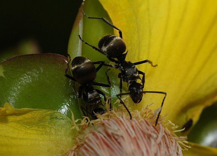 jan 31 0220 2 ants dinner