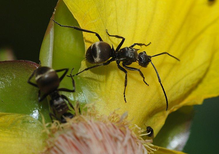 jan 31 0221 1 ant walking