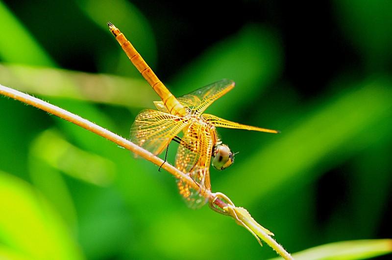 jan_31_5709_dragonfly.jpg