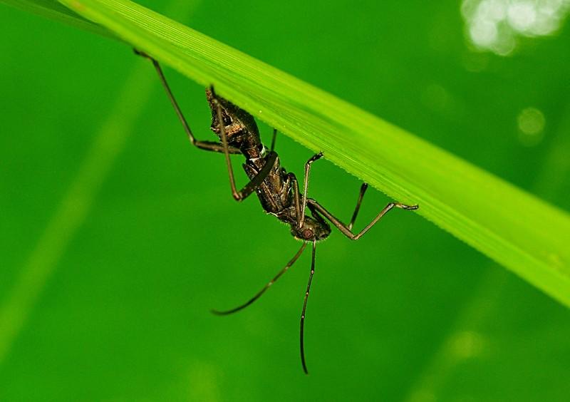 jul 03 8731 strange insect