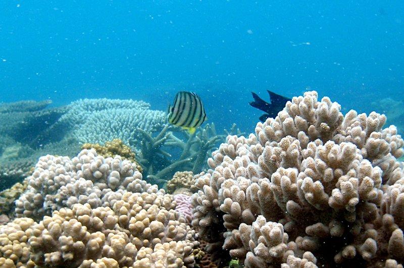 jul 04 0314 fish