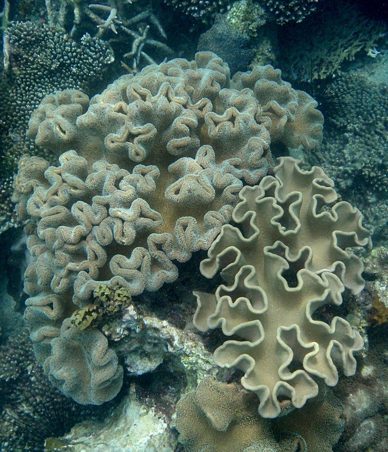 jul 04 0420 soft coral