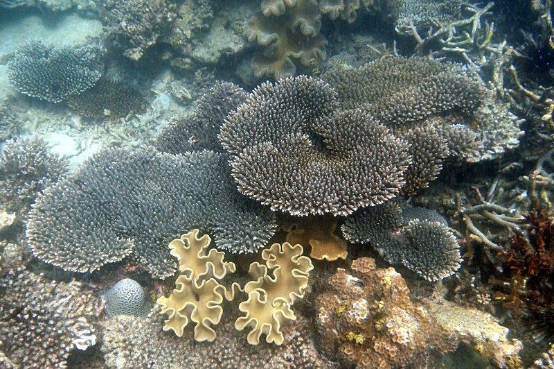 jul 04 0423 colorful coral