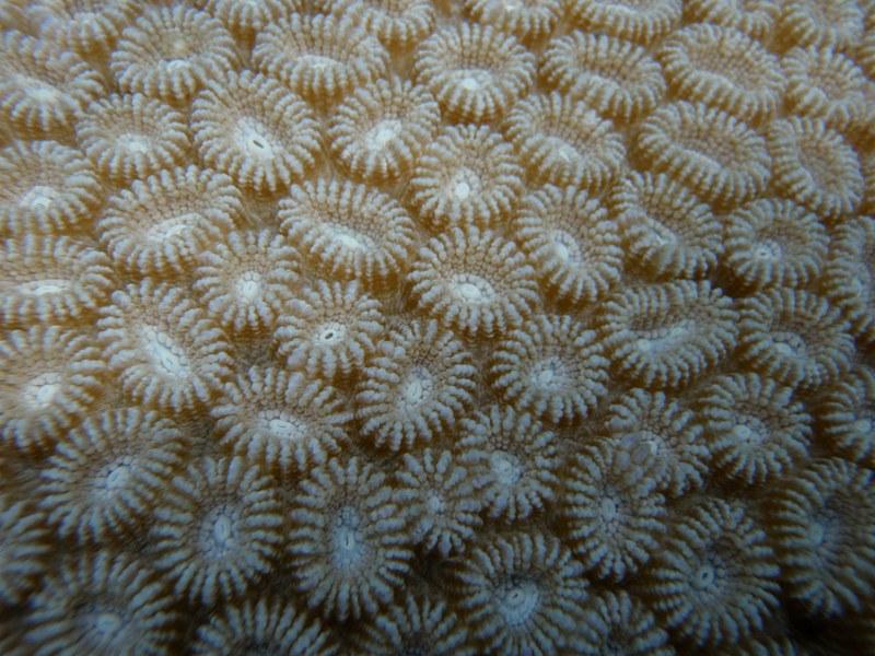 jul 04 0435 circle coral