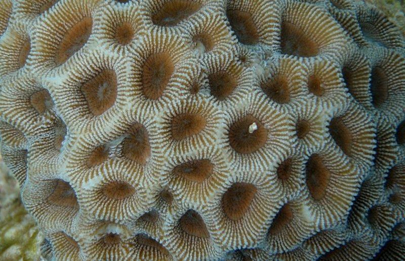 jul 04 0440 circle coral