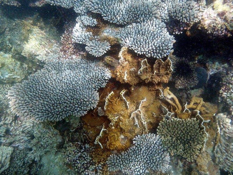 jul 04 0542 edge coral