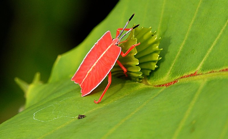 jul 07 1937 orange insect