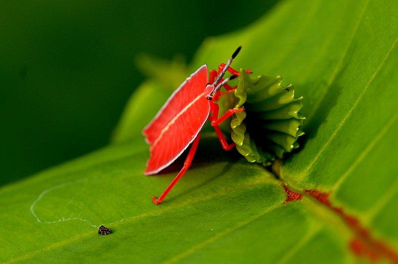 jul 07 1942 orange insect