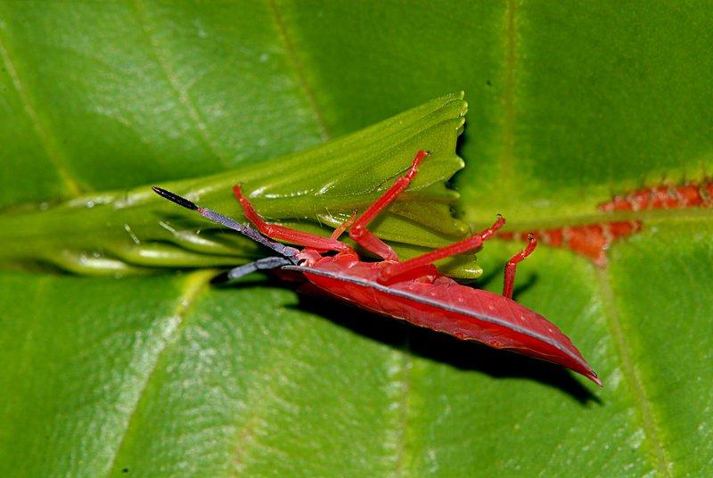 jul 07 2086 orange insect side